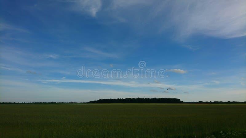 Όμορφος ουρανός πέρα από τον πράσινο τομέα κοντά στο δάσος στοκ εικόνες
