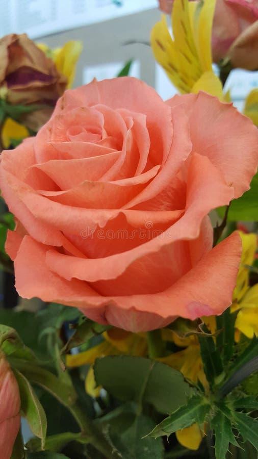 όμορφος πορτοκαλής αυξή&th στοκ φωτογραφίες