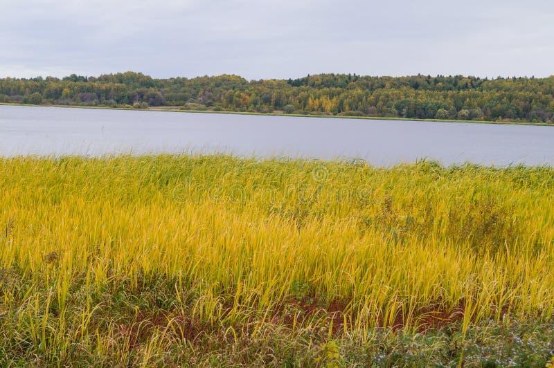 Όμορφος ποταμός τοπίων φθινοπώρου και κίτρινη χλόη στοκ εικόνα με δικαίωμα ελεύθερης χρήσης