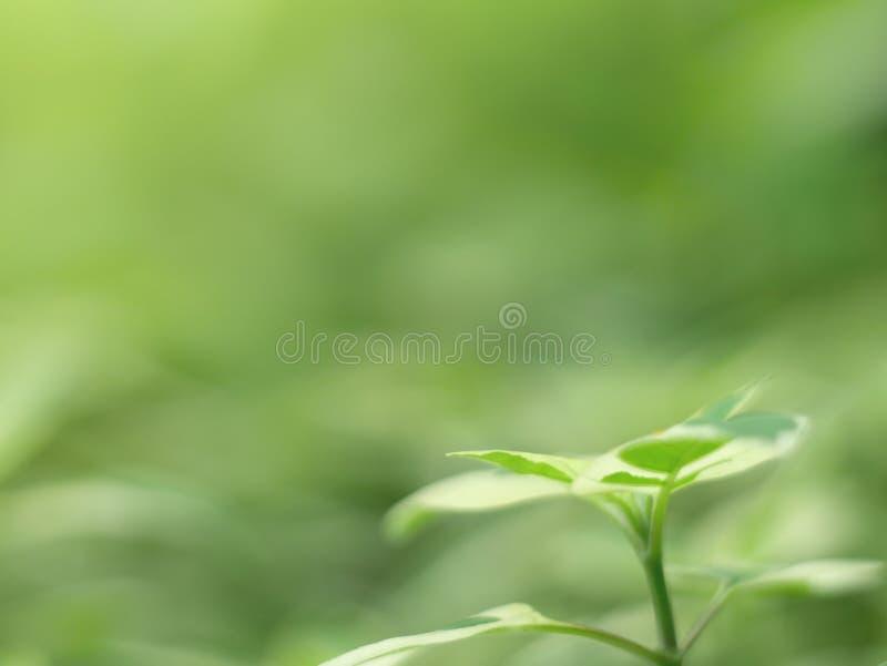 Όμορφος πράσινος βγάζει φύλλα και waterdrop υπόβαθρο και αφηρημένη σύσταση για την ταπετσαρία και ειρηνικός στοκ φωτογραφία με δικαίωμα ελεύθερης χρήσης