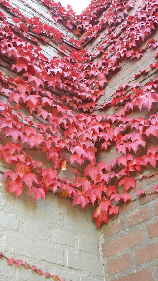 Όμορφος ρόδινος τοίχος στοκ φωτογραφία με δικαίωμα ελεύθερης χρήσης