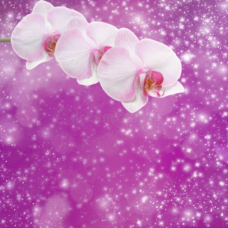 Όμορφος ρόδινος κλάδος ορχιδεών σε ένα αφηρημένο υπόβαθρο στοκ φωτογραφίες με δικαίωμα ελεύθερης χρήσης