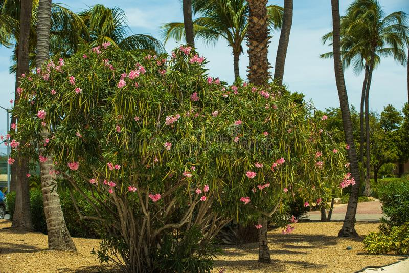 Όμορφος συνδυασμός πράσινων τροπικών δέντρων και φυτών στο μπλε ουράνιο φόντο Υπέροχο φυσικό τοπίο στοκ εικόνες με δικαίωμα ελεύθερης χρήσης