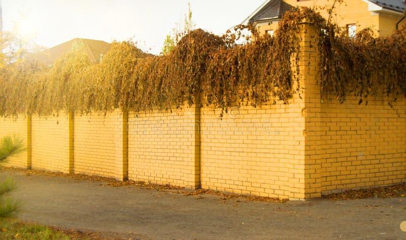 Όμορφος σύγχρονος φράκτης φιαγμένος από κίτρινο τούβλο και σγουρές στεγνωμένες εγκαταστάσεις σε το στο φως του ήλιου φθινοπώρου στοκ εικόνες