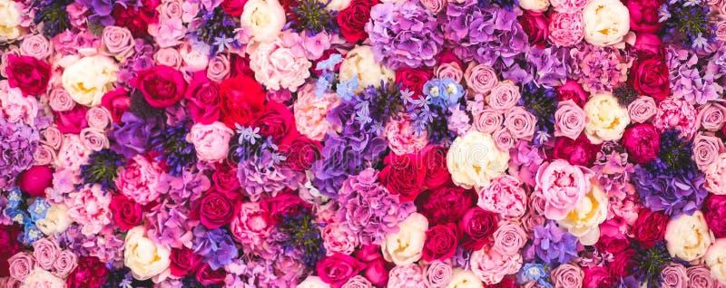 Όμορφος τοίχος φιαγμένος από κόκκινα ιώδη πορφυρά λουλούδια, τριαντάφυλλα, τουλίπες, Τύπος-τοίχος, υπόβαθρο στοκ φωτογραφία με δικαίωμα ελεύθερης χρήσης