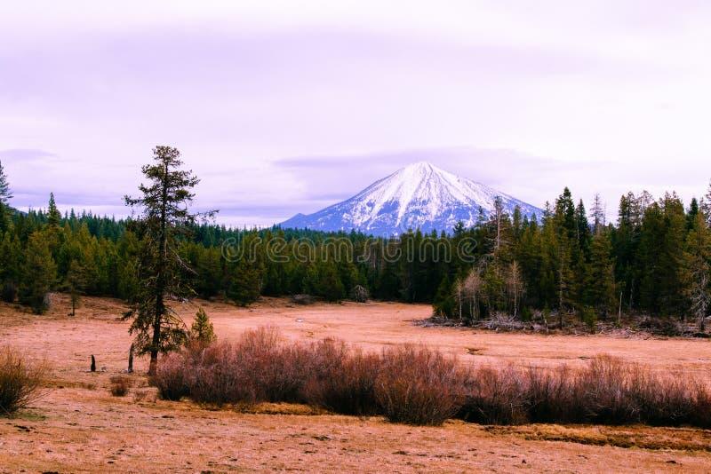 Όμορφος τομέας με τους ξηρούς θάμνους και πράσινα δέντρα πεύκων με ένα υψηλό καταπληκτικό χιονώδες βουνό στην πλάτη στοκ εικόνα με δικαίωμα ελεύθερης χρήσης
