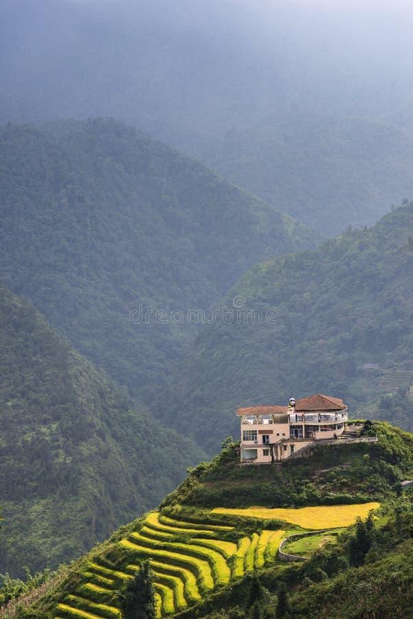 Όμορφος τομέας πεζουλιών ρυζιού στο λόφο στο βόρειο Βιετνάμ στοκ φωτογραφία