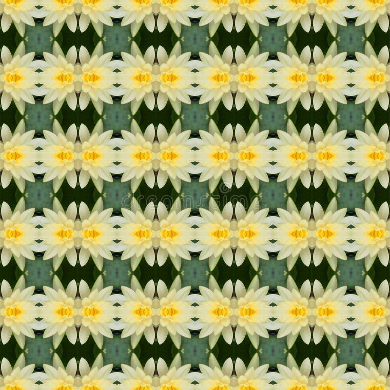 Όμορφος του λουλουδιού λωτού άνευ ραφής διανυσματική απεικόνιση