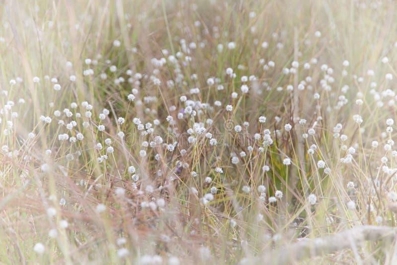 Όμορφος των λουλουδιών Blackfoot πεδιάδων στοκ φωτογραφίες με δικαίωμα ελεύθερης χρήσης