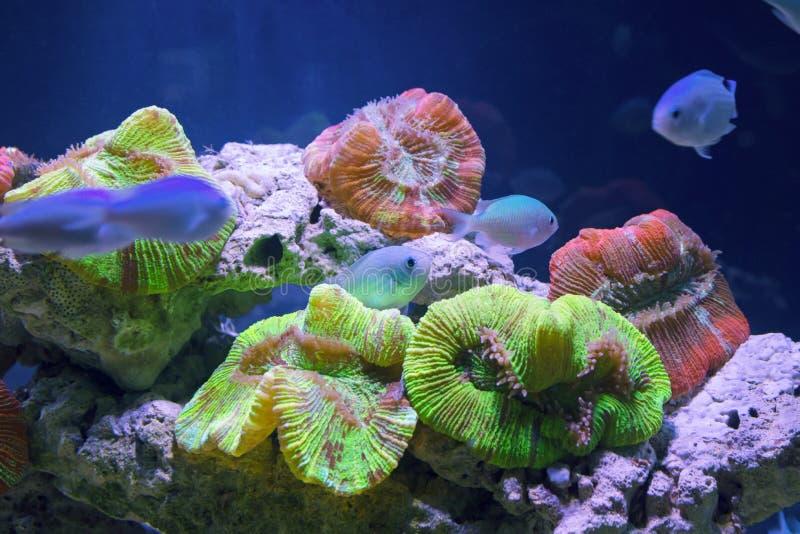 Όμορφος υποβρύχιος κόσμος με τα τροπικά ψάρια στοκ φωτογραφία με δικαίωμα ελεύθερης χρήσης