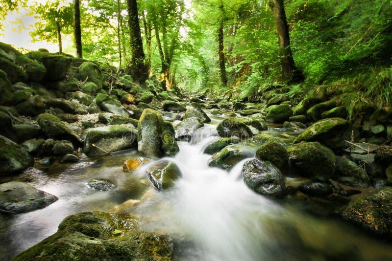 Όμορφος φρέσκος κολπίσκος στο μαύρο δάσος στοκ εικόνα με δικαίωμα ελεύθερης χρήσης