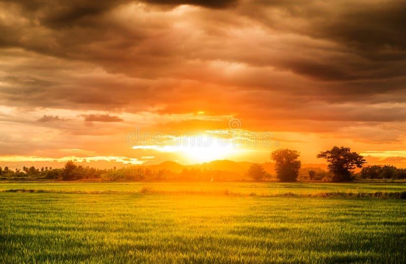 Όμορφος φυσικός τομέων ρυζιού στοκ εικόνα με δικαίωμα ελεύθερης χρήσης