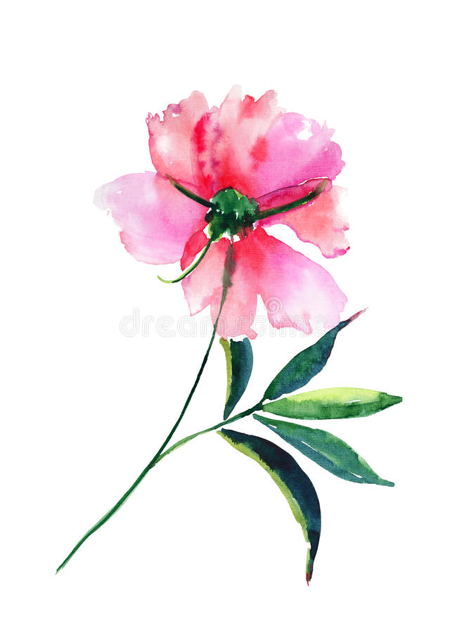 Όμορφος φωτεινός τρυφερός ευγενής περίπλοκος floral βοτανικός βοτανικός μπεζ κωνιώδης ρόδινος peony άνοιξη κρητιδογραφιών με το π ελεύθερη απεικόνιση δικαιώματος