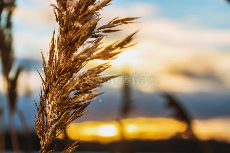 όμορφος χειμώνας ηλιοβασιλέματος στοκ εικόνα με δικαίωμα ελεύθερης χρήσης
