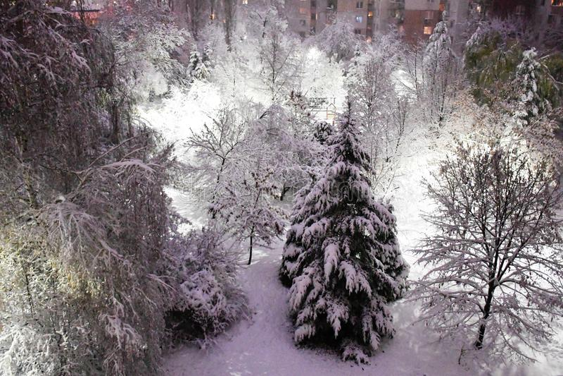Όμορφος χειμώνας σε ένα πάρκο στοκ φωτογραφίες