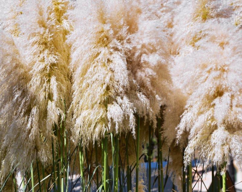 Όμορφος χτυπήστε ελαφρά της χλόης την ανάπτυξη σε έναν θερινό τομέα ή σε ένα λιβάδι στοκ εικόνες