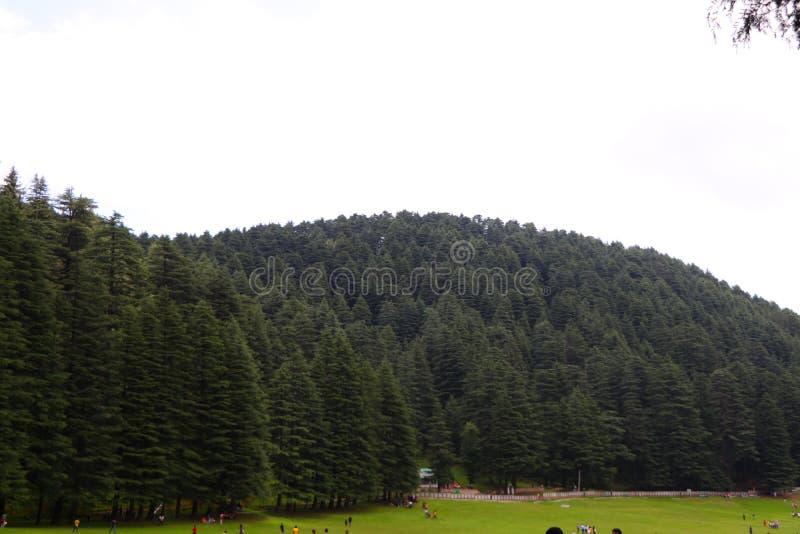 Όμορφος deodar δασικός λόφος δέντρων σε Khajjair, Himachal Pradesh, Ινδία στοκ φωτογραφίες με δικαίωμα ελεύθερης χρήσης