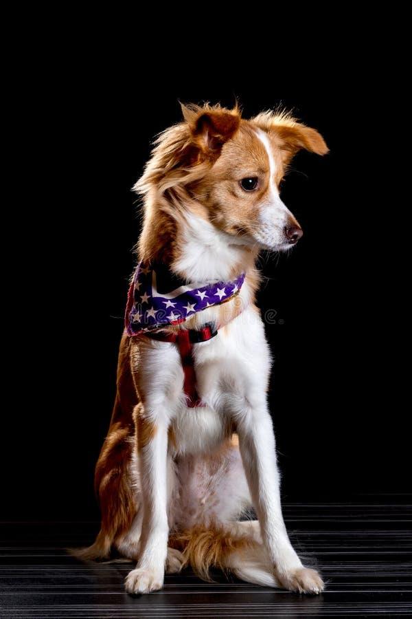 Όμορφος redhead με ένα άσπρο σκυλί στοκ εικόνες με δικαίωμα ελεύθερης χρήσης