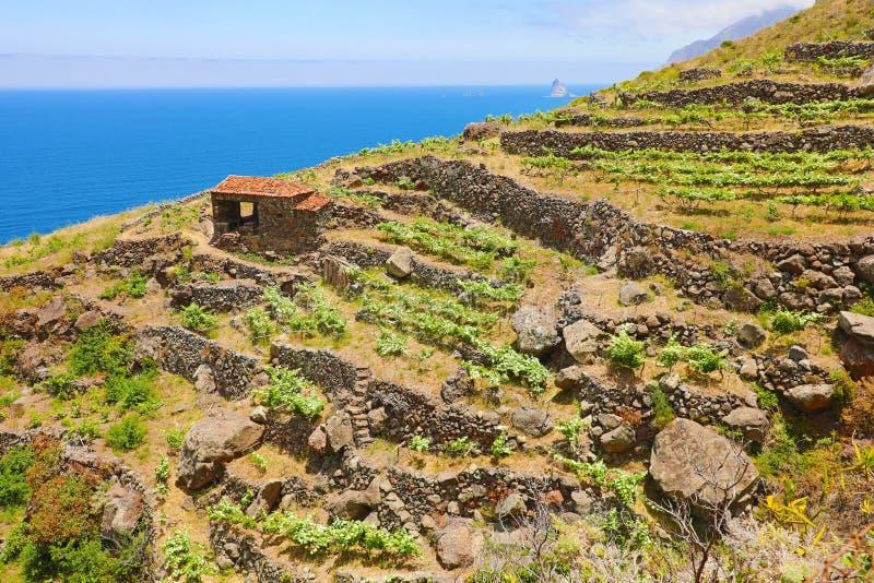 Όμορφο άγριο τοπίο πάρκων Anaga αγροτικό Tenerife στο νησί, Κανάρια νησιά, Ισπανία στοκ εικόνα