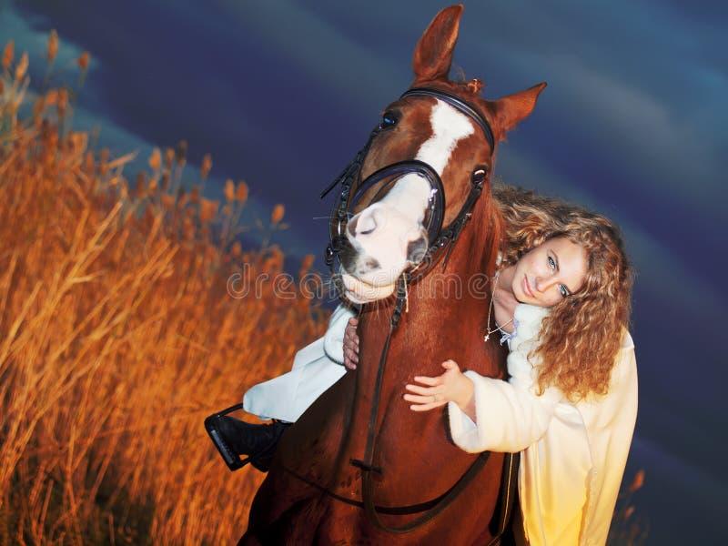όμορφο άλογο πεδίων βραδ&io στοκ φωτογραφίες με δικαίωμα ελεύθερης χρήσης
