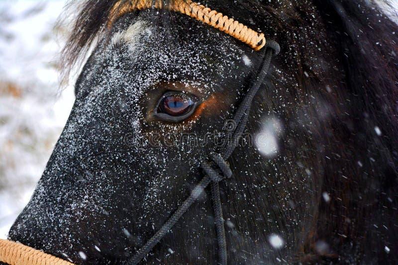 Όμορφο άλογο που ονομάζεται Pluto στοκ εικόνα