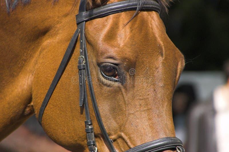 Download όμορφο άλογο στοκ εικόνα. εικόνα από μάτι, υπερήφανος - 1549867