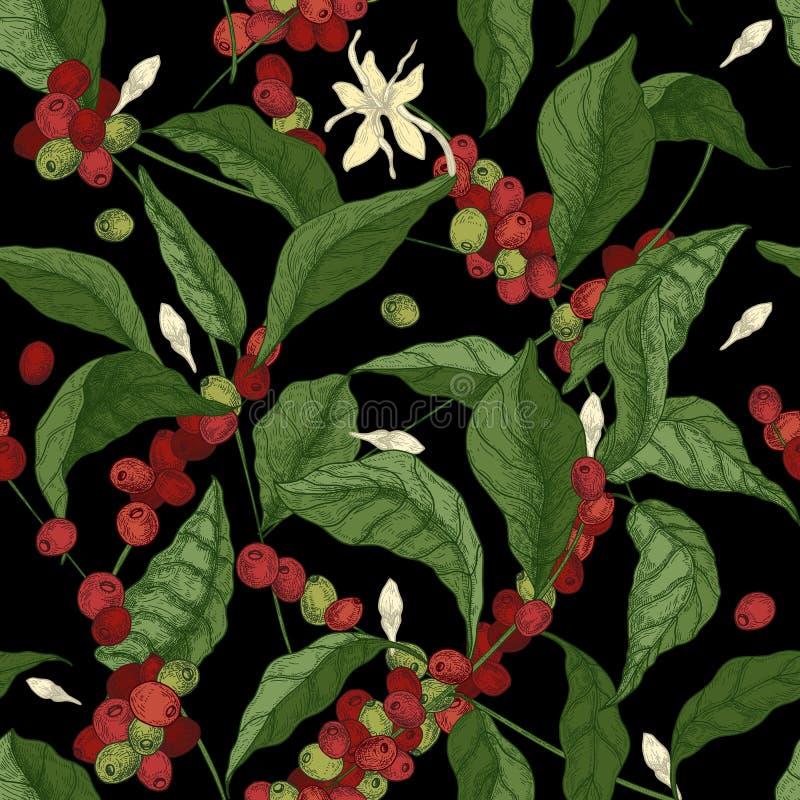 Όμορφο άνευ ραφής σχέδιο με τους κλάδους δέντρων coffea ή καφέ, τα φύλλα, τα ανθίζοντας λουλούδια και τα φρούτα στο μαύρο υπόβαθρ διανυσματική απεικόνιση