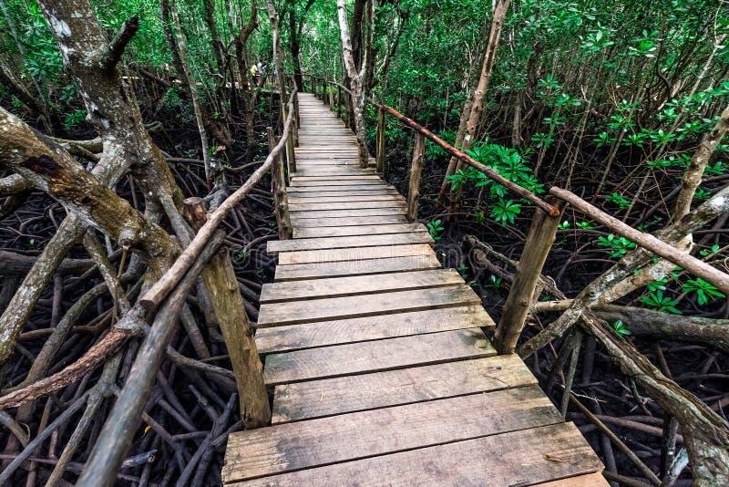 Όμορφο δάσος μαγγροβίων με την ξύλινη πορεία μέσα σε Zanzibar στοκ εικόνες