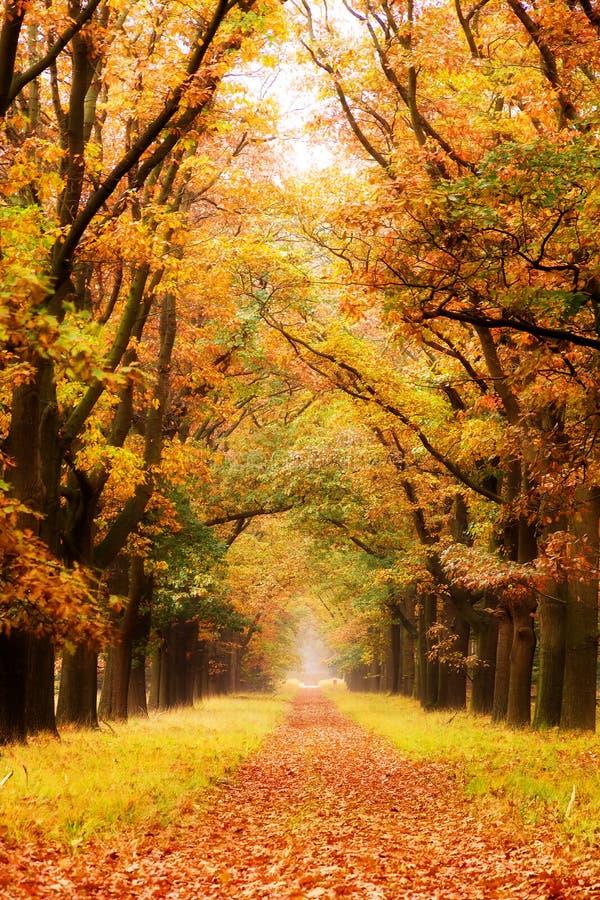 Πάροδος φθινοπώρου στοκ φωτογραφίες