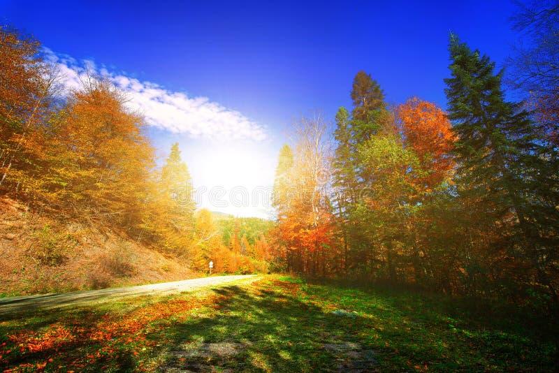 όμορφο δάσος φθινοπώρου στοκ φωτογραφία