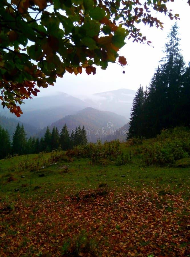 όμορφο δάσος στοκ φωτογραφία με δικαίωμα ελεύθερης χρήσης