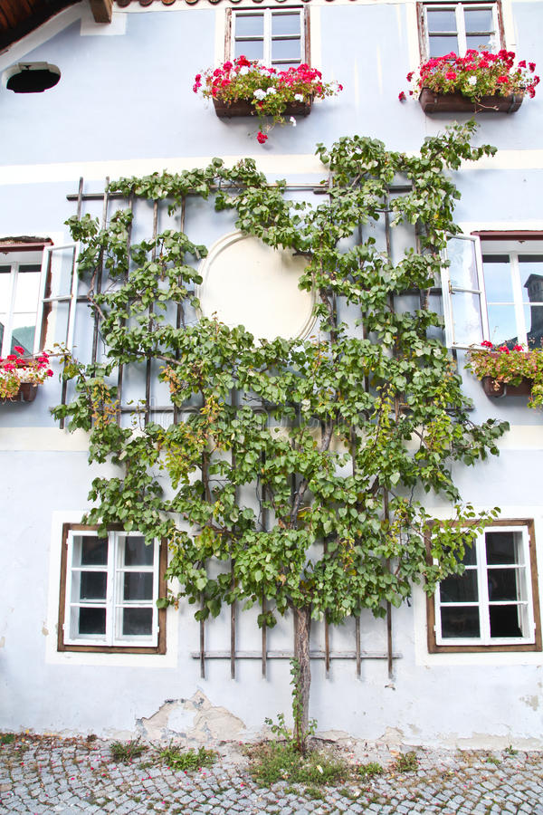 Όμορφο δέντρο σε Hallstatt στοκ εικόνα