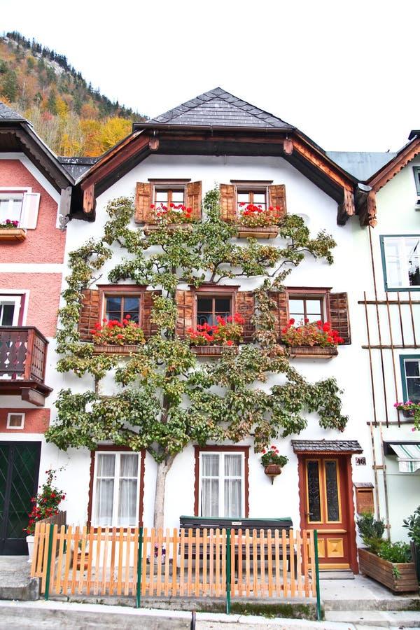 Όμορφο δέντρο σε Hallstatt στοκ φωτογραφία