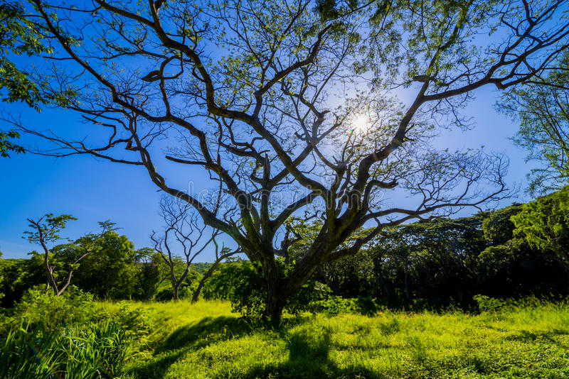Όμορφο έδαφος scape των μεγάλων εγκαταστάσεων δέντρων βροχής στον πράσινο τομέα χλόης στοκ φωτογραφία με δικαίωμα ελεύθερης χρήσης