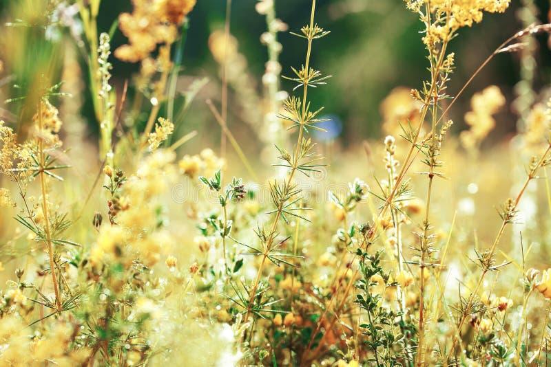 Όμορφο αγροτικό τοπίο στοκ εικόνες με δικαίωμα ελεύθερης χρήσης