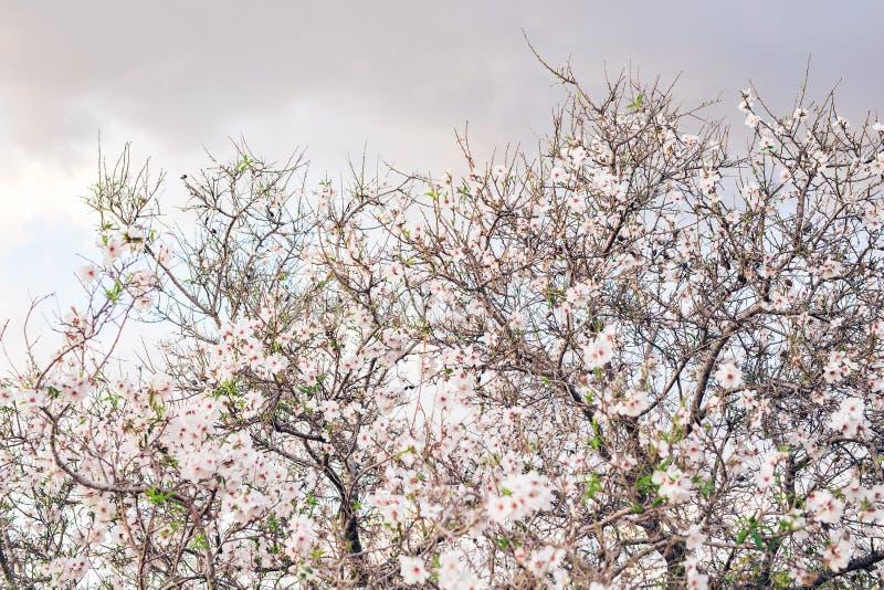 Όμορφο ανθίζοντας δέντρο άνοιξη κινηματογραφήσεων σε πρώτο πλάνο στοκ εικόνες με δικαίωμα ελεύθερης χρήσης