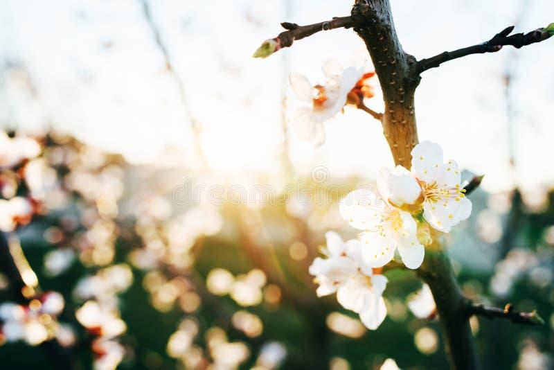 Όμορφο ανθίζοντας δέντρο άνοιξη κινηματογραφήσεων σε πρώτο πλάνο στο πάρκο στοκ φωτογραφίες με δικαίωμα ελεύθερης χρήσης