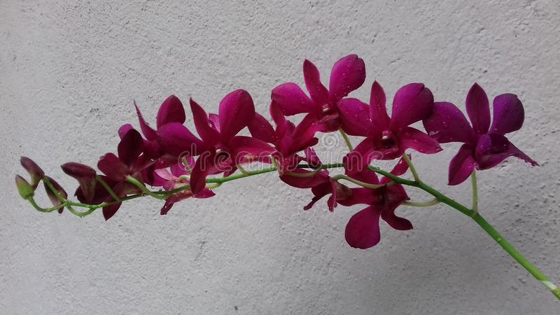 Όμορφο ανθίζοντας orchid στοκ φωτογραφίες
