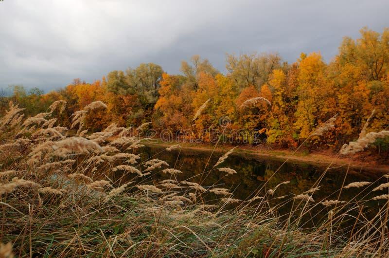 Όμορφο απόγευμα στο φθινοπωρινό πάρκο στοκ φωτογραφίες με δικαίωμα ελεύθερης χρήσης