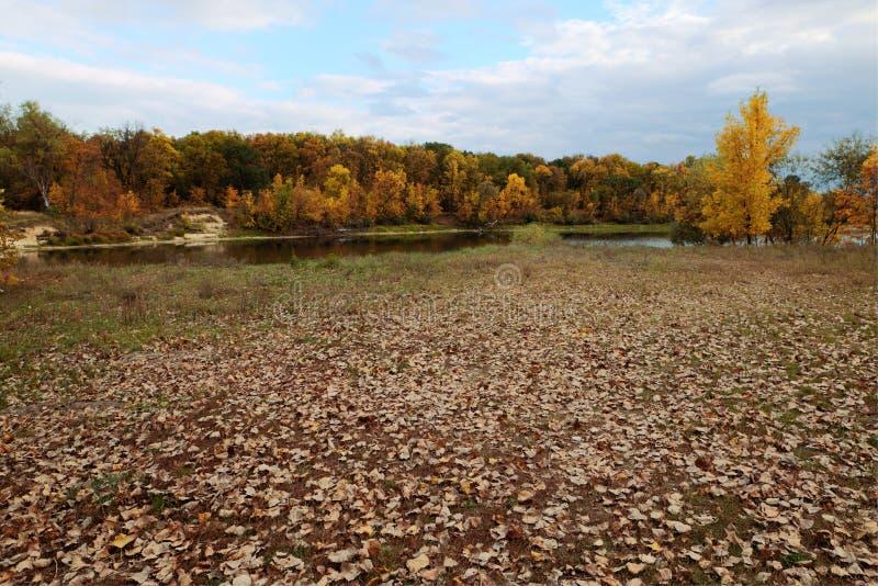 Όμορφο απόγευμα στο φθινοπωρινό πάρκο στοκ φωτογραφία