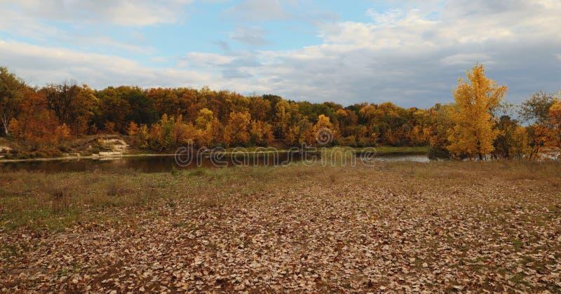 Όμορφο απόγευμα στο φθινοπωρινό πάρκο στοκ φωτογραφία με δικαίωμα ελεύθερης χρήσης
