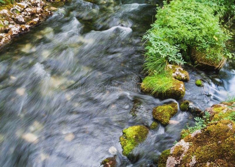 Όμορφο αλπικό ρυάκι με το φρέσκο πράσινο βρύο στις πέτρες στο εθνικό πάρκο Berchtesgaden στοκ εικόνες