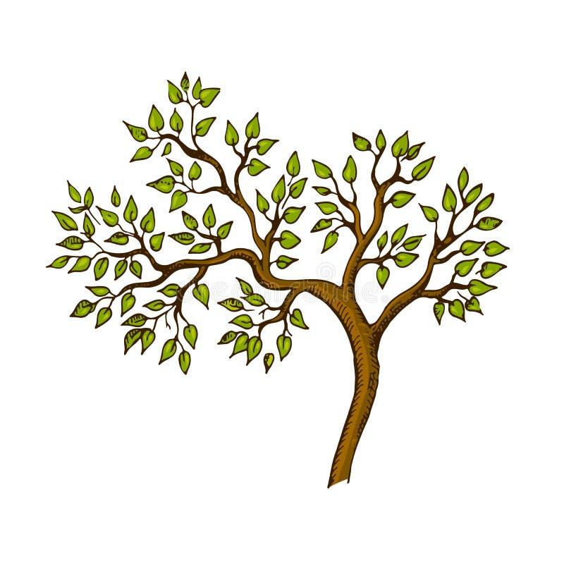 Όμορφο γραφικό δέντρο με τα πράσινα φύλλα και τους καφετιούς κλάδους διανυσματική απεικόνιση