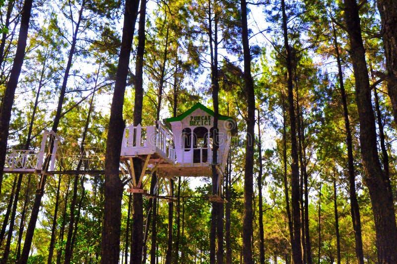 Όμορφο δάσος πεύκων σε Yogyakarta στοκ φωτογραφία με δικαίωμα ελεύθερης χρήσης