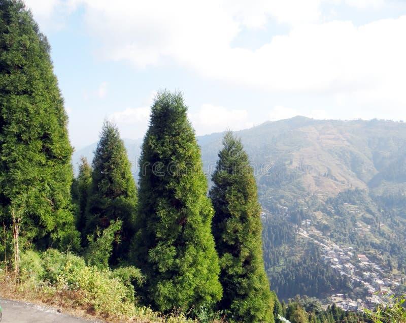 Όμορφο δάσος πεύκων στο Ιμαλάια στοκ φωτογραφία με δικαίωμα ελεύθερης χρήσης