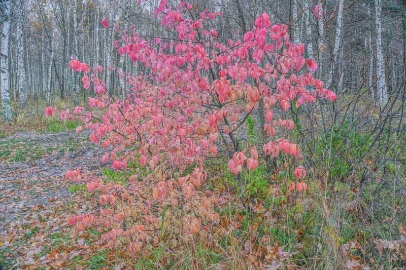 Όμορφο δέντρο στα χρώματα φθινοπώρου στοκ εικόνα