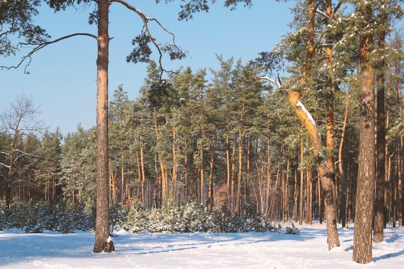 Όμορφο δέντρο στο χειμερινό τοπίο αργά το βράδυ στις χιονοπτώσεις στοκ εικόνες με δικαίωμα ελεύθερης χρήσης