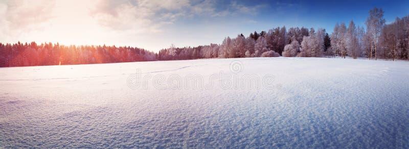 Όμορφο δέντρο στο χειμερινό τοπίο αργά το βράδυ στοκ φωτογραφία με δικαίωμα ελεύθερης χρήσης