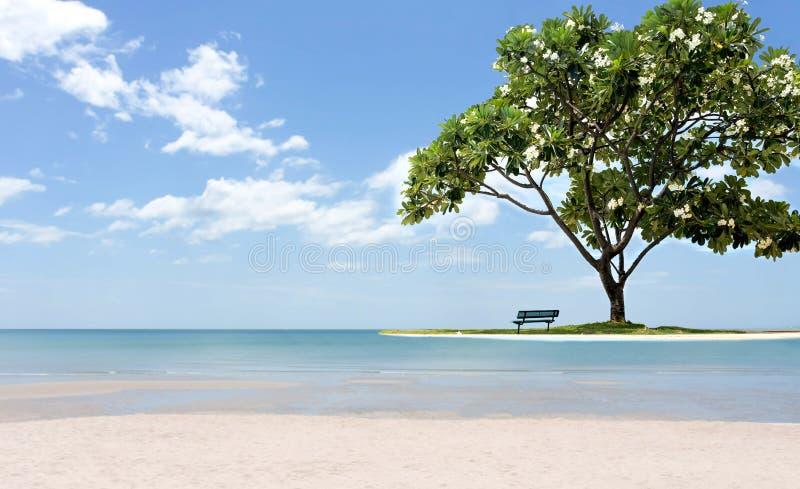 Όμορφο δέντρο frangipani με την καρέκλα στην άσπρη άμμο παραλιών και στοκ φωτογραφία με δικαίωμα ελεύθερης χρήσης