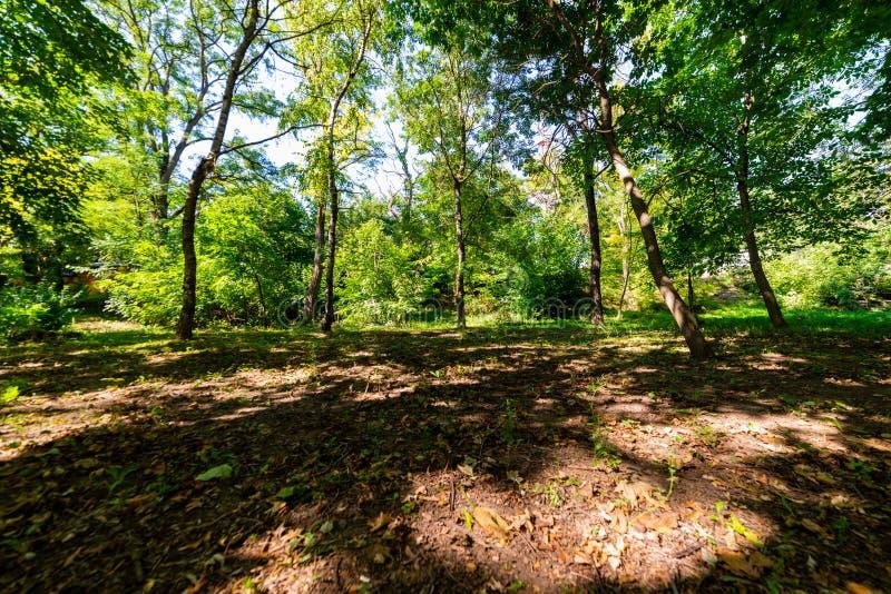 Όμορφο δασικό τοπίο Ξέφωτο στο δάσος ή το πάρκο στοκ εικόνα με δικαίωμα ελεύθερης χρήσης